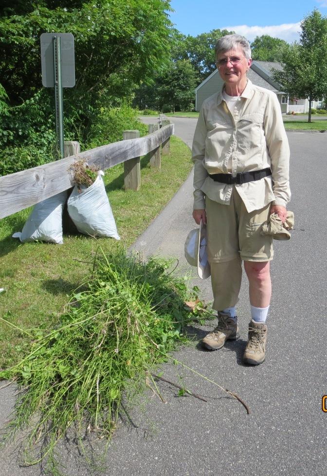 6,960 Invasive Plants Removed by Lathrop Volunteers!