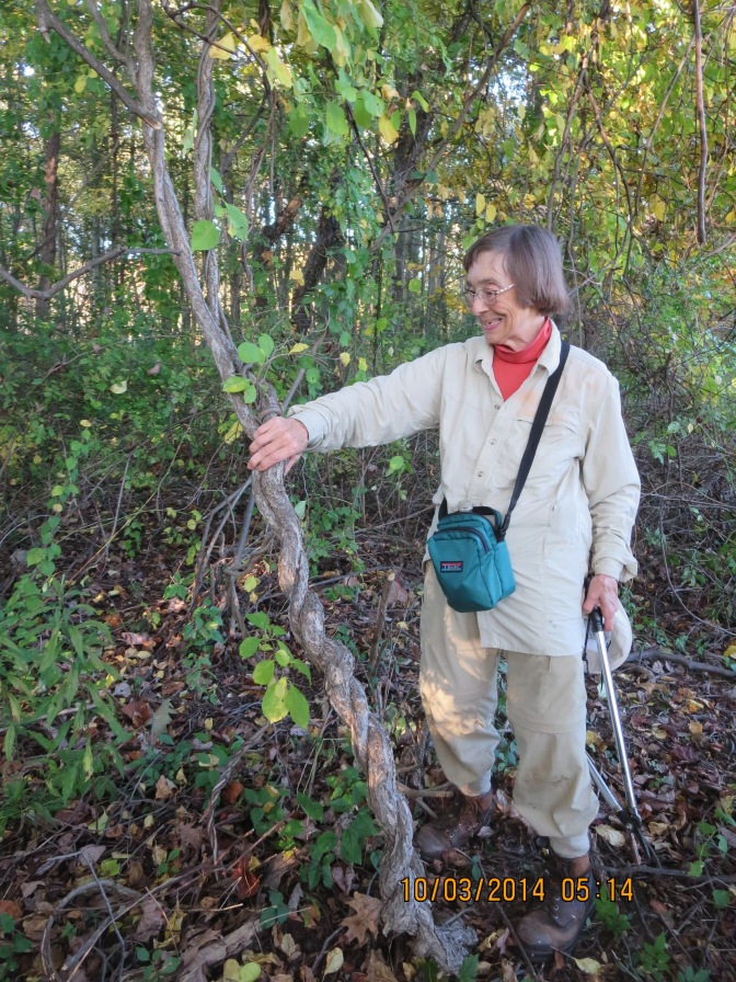 Save our Trees from Invasive Vines