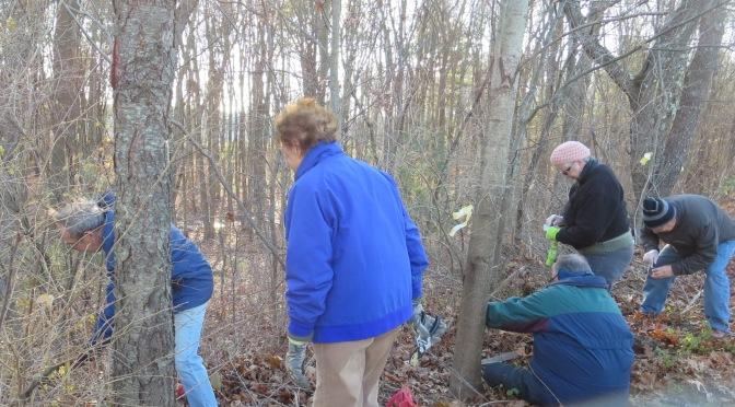 Lathrop Volunteers and Professionals Attack Invasives