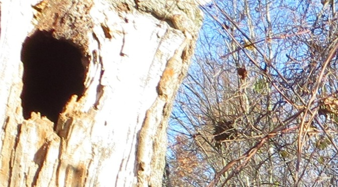 Old Oak Tree Mystery Solved
