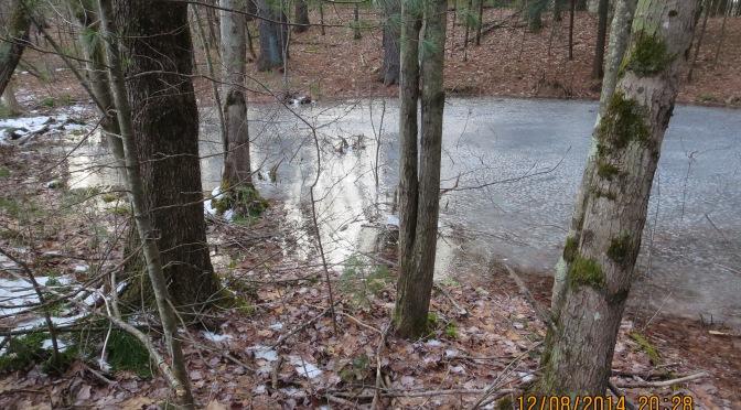 Lathrop's Vernal Pools
