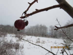 Many fruit trees feed our birds