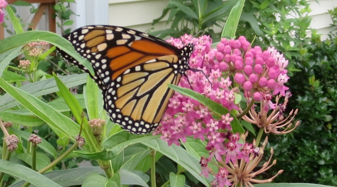 A Butterfly's Guide to Plants