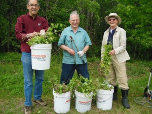 Roger Herman, Diedrick Snoek, and Sharon Grace with invasive garlic mustard they removed from Lathrop land. Photo by Barbara Walvoord, May 21, 2015.