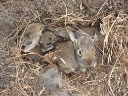 A Rabbit Story