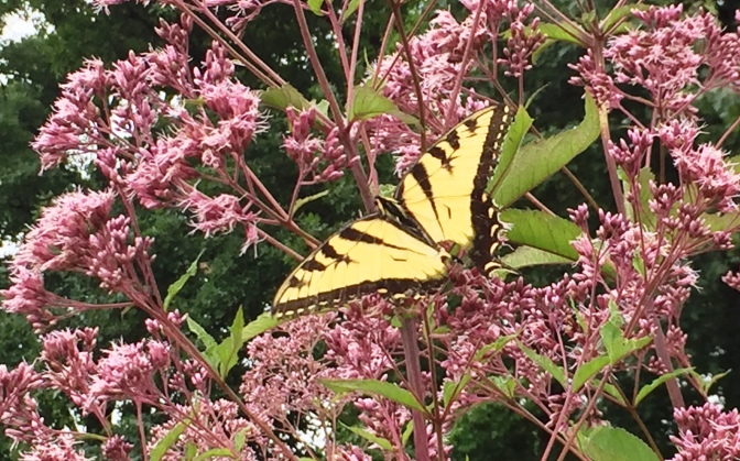 Butterflies and Trees