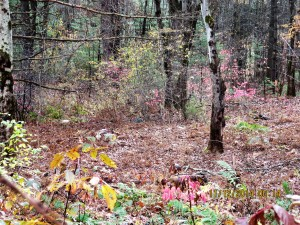 invasives-woods-nov-14-005
