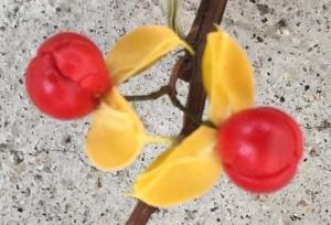 bittersweet-berries-img_2297