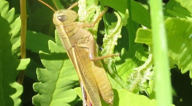 The Grasshopper Olympics