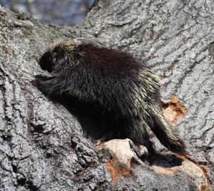porcupine-chuck-2016-crop-untitled
