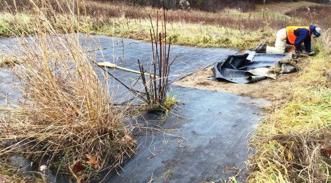 How to Restore Native Plants to a Meadow