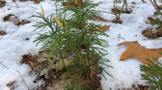 It's a Mini-tree!  It's a Wildflower!  It's a Moss!  It's a Fern!
