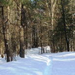 Snowshoe trail in the east campus woods,
