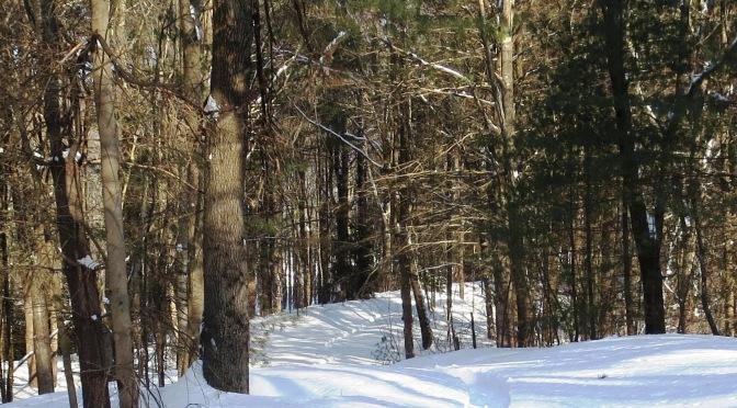 Winter Walks at Lathrop