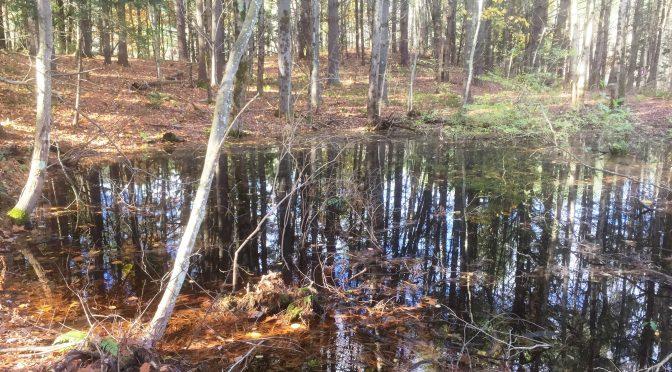 Lathrop's Quiet Vernal Pools