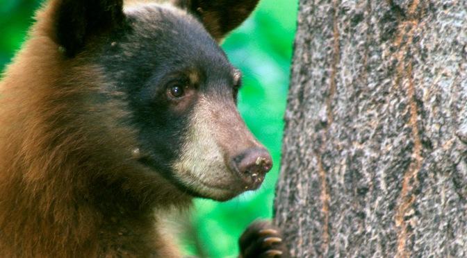 Teddy Bear Picnic at Lathrop